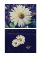 Chamomile by LSDsuicide