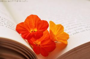 Day 21. A flower while you read by smilejustbcuz