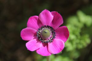 Anemone by labronico7