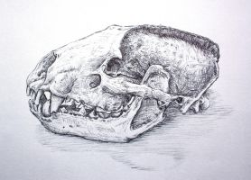 badger skull by SwarzezTier