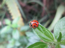 another ladybug shot by MidnightsBloom