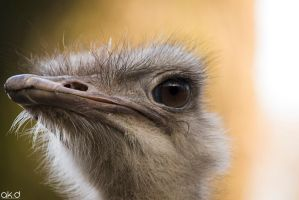 Ostrich by Mob1