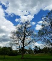 park and sky by GUDRUN355