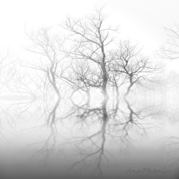 Existence by anaPhenix