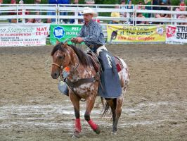 22 goshen rodeo by dragon-orb