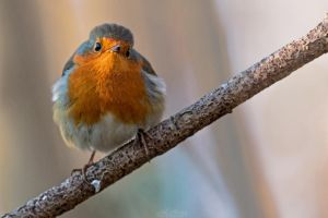 Com'on Robin, you're so fat! Did you ate Batman? by Seb-Photos