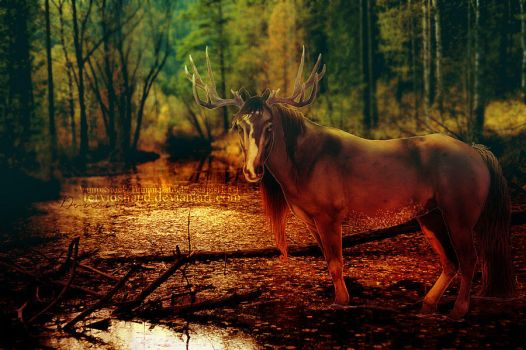 Into the wild by FervidsHand