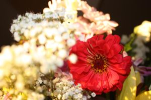 Anniversary Flowers 2 by miss-masami