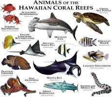 Animals of the Hawaiian Coral Reefs by rogerdhall