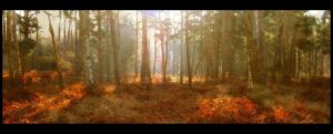 Forest by Forestina-Fotos