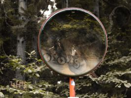 Mirror mirror in the forest by x-pyre12