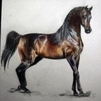 Arabian Stallion - colored by akuinnen24