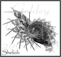 Shelob by Goldey--Too