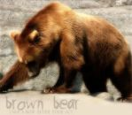 Brown Bear by Korima