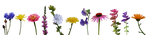 Flower Collection II by Eirian-stock