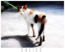 Calico by ItsSuperSam