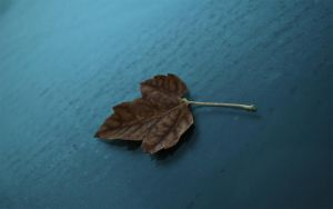First leaf of fall wallpaper by lowjacker