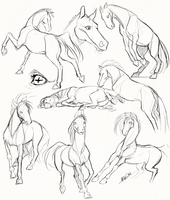 Horses by Nerior