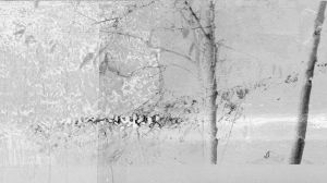 ground, tree and uncertainty 6 by iram