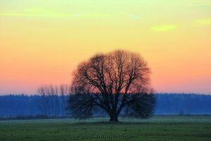 beautiful trees 18 by MT-Photografien