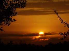 Sunset with olive-trees by Cadfail