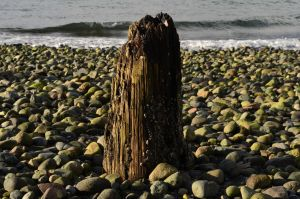 rocks, tree stump by acollins973