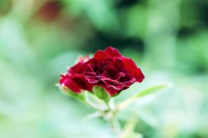 A little red by samg1994