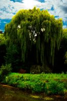 Willow by red5