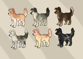 Dog adopts - open - by PointAdoptsforyou