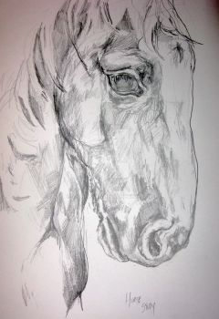 horse study by lamelobo