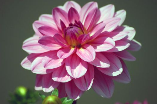 flowers027 by CandG-stock