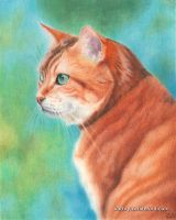 Ginger by KathrynWhiteford