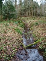 Forest Stream Stock by Lucy-Stock