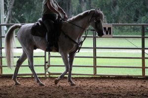 Working Light Breed Stock 6 by OceanLore