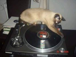 Dj Cat by mingus