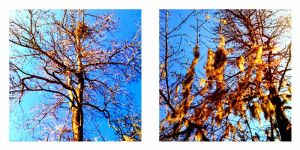 The Trees - the whisper... by aleynarose