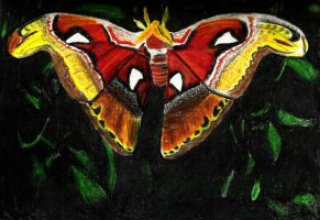 Butterfly by isays