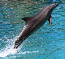 dolphin magic by talentwithin