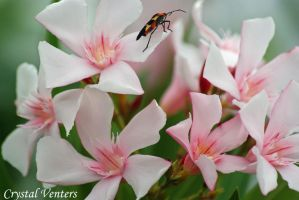 Bug on Oleander by poetcrystaldawn