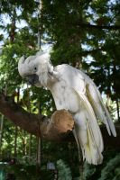 White macaw 1 by hiresblur