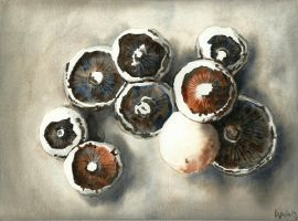 Mushrooms by benjaminbananatree
