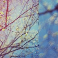 q0112 - in spring by SlevinAaron