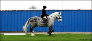 Shire Horse Show: Ridden 4 by ladyepona