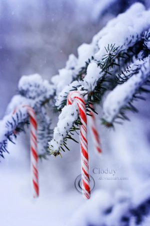 That time of year by cloduy