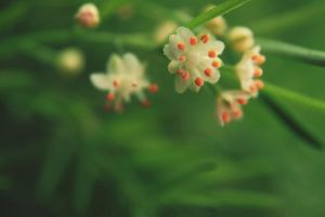baby flowers by h20baby93
