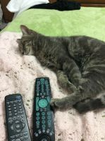 Too much TV. by Selune13