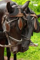 Horses by Des-Alagos