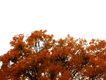 762 Autumn Tree Cutout 01 by Tigers-stock