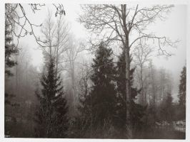Foggy Forest by crilleb50