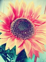 Sunflower by Made-in-Popsiinette